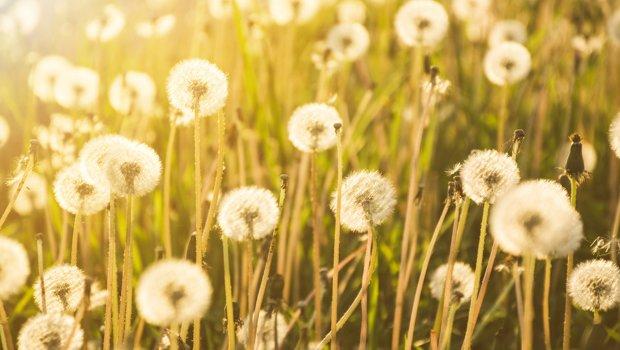 astım ve polen ilişkisi